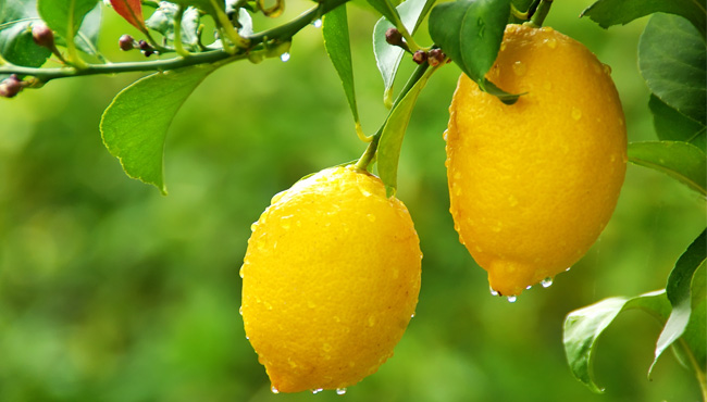 I love Lemons..here are some different reasons why…