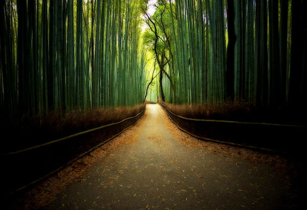 A path between a bamboo forrest.